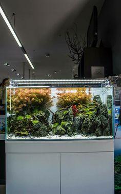 Aquarium Design | 244 Best Aquarium Design Images Aquarium Design Fish Tanks Aquarium