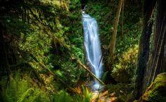 Wodospad, Las, Dżungla
