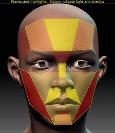 Planes of face.jpg (727×841)
