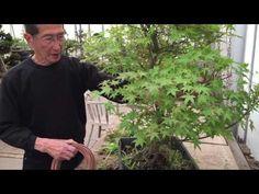 Techniques For  Cultivating Bonsai Trees in Kinney, Pennsylvania – Bonsai Gurus
