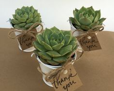 Looking for the perfect, unique gift to give your guests? This listing is for 25 succulent favors in white pails! All thats left for do on arrival is unpack and tie the gift tag around the handle of the pail with the ribbon or twine supplied :) You will receive: - 25 beautiful, high quality rooted rosette type succulents already planted in white pails approx. 2-2.5 in size. Selection will be a variety of rosette type succulent (based on inventory)- dont worry they are all beautiful! - 25…