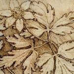 These Flowers were drawn by Leonardo using pen and ink. This drawing attests not only to his great attention to detail, but his fascination for the natural world. c.1490