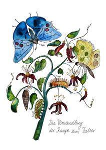 Frau Ottilie Illustration: Kunstdruck *Verwandlung zum Schmetterling*