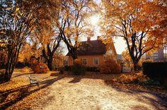 Autumn ♥
