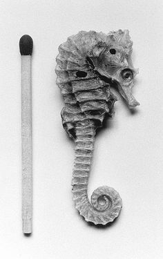 Poor little Seahorse - please leave them in the ocean where they belong. Their numbers are dwindling.