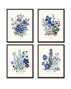 """FLOWERS OF THE GARDEN"" BLUE SERIES PRINT SET NO. 13 This fine art print set features 4 antique botanical illustrations in shades of blue, violet and periwinkle which have been digitally enhanced and"