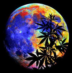cannabis art - abstract art | www.CannaBlogna.com: We enjoy your company…Keep ... cannablogna.com