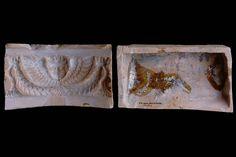 Fragment des Models einer Gesimskachel mit geflügeltem Puttenkopf über lorbeerblattbesetztem Feston, unglasiert, zweite Hälfte 17. Jh., Ettlingen, Albgaumuseum, urspr. Ettlingen, Klösterle
