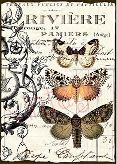 The french MOTH  r25  Kunstdruck Digiprint   von Vintage Prints auf DaWanda.com