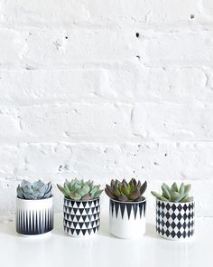 This is madness! Succulents are going into every container/cup/glass I own  Who drinks expresso anyway!? #imayhavetoquittheblogtotakecareofthem
