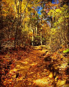 Autumn foliage lines a path through the woods in Virginia. Candice Trimble, Your Take Yellow Brick Road, Beautiful Scenery, Fall Pumpkins, Countryside, Paths, Virginia, Woods, Autumn, Group