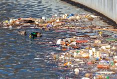 Researchers have confirmed reports of an alarming increase of plastic pollutants in the Great Lakes, and have found that the plastics are are beginning to behave like the concentrated toxic conglomeration known as the Great Pacific Garbage Patch. Much like the oceans and beaches around the world, the production and dumping of plastic products has effected the Great Lakes region. Some of the plastic pollution in Lake Erie has deteriorated into plastic pellets—some of them microscopic and…