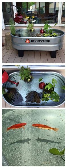 Make pond out of a horse trough. Just add water, pond plants, and fish! Make pond out of a horse trough. Just add water, pond [. Aquaponics System, Aquaponics Plants, Aquaponics Greenhouse, Horse Trough, Goldfish Pond, Turtle Pond, Diy Pond, Pond Plants, Water Garden Plants