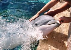 I want to touch a dolphin!  Maybe even be in the water with them!