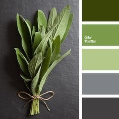 Color Palette #2074: Quiet palette in which different shades of green--a deep dark green, grass and apple--blend harmoniously with the soothing color of wet asphalt and a neutral gray.