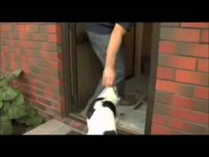 The Secrets To Dog Training Dvd - Tricks and Commands Videos for Dog Tra...