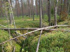Tuupovaara, Joensuu, Finland