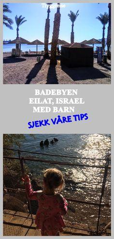 Baby Barn, Eilat, Israel, Movie Posters, Movies, Films, Film Poster, Cinema, Movie