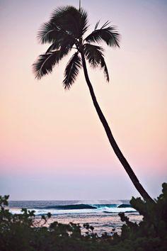 """Surf Print-Jeremiah Klien """"Peak and Palm"""" — Canvas Prints, The Canvas Wave LLC"""