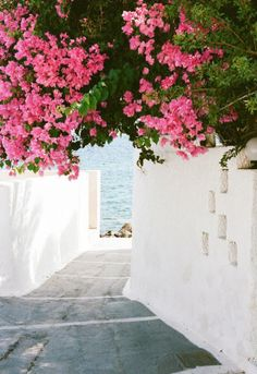bright + beautiful bougainvilleas