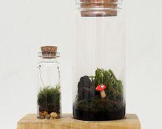 Terrarium Kit With Wood Base