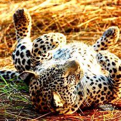 Safari, Turtle, Animals, Tour Operator, Nature Reserve, Wilderness, Elephants, Travel Report, Tours