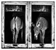 in/out    a first of a series about animals and captivity