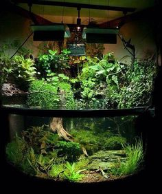 Now this is awesome!! Half land half water:) I would put some Archer Fish and Hatchet Fish in the water area and a few Red Eyed Tree Frogs in the top area! What would you put in it?