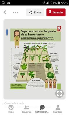 Gardening, Vertical Vegetable Gardens, Three Sisters, Greenhouses, Agriculture, Country, Plants, Lawn And Garden, Horticulture