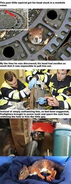 See even firefighters love squirrels