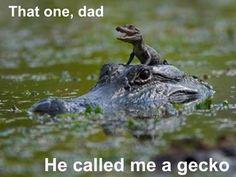 He called me a gecko...