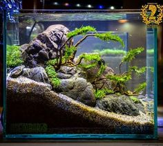 Diy Fish Tank River Rock Decor Aquascaping Ideas Aquarium on Aquatic Eden Aquasc Tropical Fish Aquarium, Tropical Fish Tanks, Aquarium Fish Tank, Cool Fish Tanks, Aquascaping, Aquarium Landscape, Nature Aquarium, Fish Tank Design, Aquarium Terrarium
