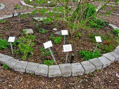 The Outlander Plant Guide: The Medicinal Gardens at Bastyr University Diana Gabaldon Outlander Series, Plant Guide, Plant Information, Medicine, University, Gardens, Outdoor Decor, Plants, Outdoor Gardens