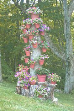 Dead Flower Pot Tree