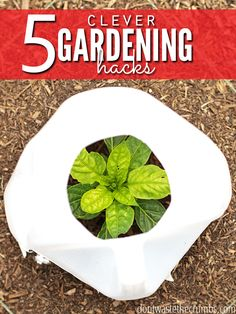 Awesome gardening hacks that really work! Tips for tomatoes, bugs, watering and keeping plants warm in cooler weather. Tried & true, these gardening tips are worth giving a try!