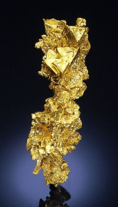 CRYSTALLIZED NATIVE GOLD Eagle's Nest Mine (Mystery Wind Mine), Placer County, California, USA Very sharp and brilliant group of Gold crystals from one of the premier specimen producing mines of recent times. Five flattened octahedrons .19 inch (4 mm) or larger, with trigonal faces, are sprinkled among other crystals of a more tabular or platy type. Color is the rich, buttery yellow that is only displayed by high Karat Gold. / Mineral Friends <3