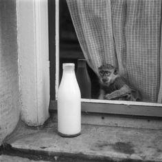 Kees Scherer (1920-1993): Amsterdam, 1950s