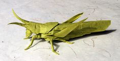 perched locust | Flickr - Photo Sharing!