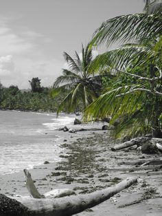 Paradise- Cahuita, Costa Rica