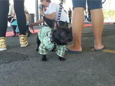 Encontro reuniu animais de estimação em shopping de Cuiabá (Foto: Carolina Holland/G1)