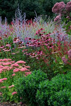 Gardening Autumn - Plant combination Sedum and Echinacea (Cone flower), Russian sage, - With the arrival of rains and falling temperatures autumn is a perfect opportunity to make new plantations Garden Planning, Beautiful Gardens, Garden Design, Perovskia Blue Spire, Perennial Garden, Autumn Garden, Perennials, Plants, Garden Inspiration