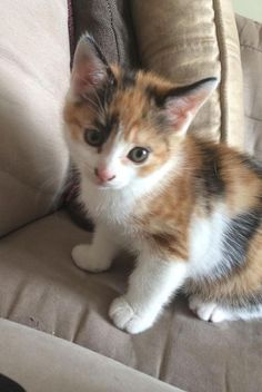 Kittens And Puppies, Baby Kittens, Kittens Cutest, Ragdoll Kittens, Tabby Cats, Funny Kittens, Bengal Cats, White Kittens, Black Cats