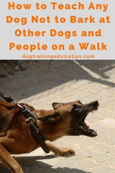 Dog Obedience Training - One of the most annoying thing your dog can do is bark or react to anything that moves. Find out how to teach your dog not to bark at other things on a walk Basic Dog Training, Training Your Puppy, Potty Training, Training Dogs, Training Online, Training Schedule, Training Classes, Training Equipment, Obedience Training For Dogs