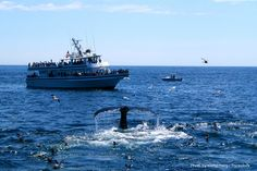 Your Ultimate Guide to Whale Watching in Cape Cod | Chatham Gables Inn