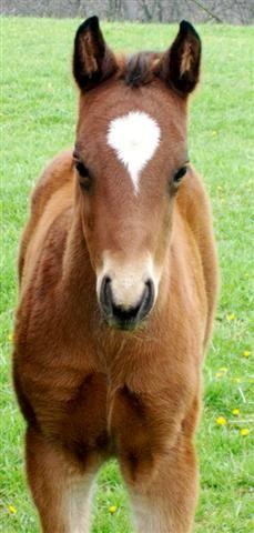 Baby Horse Foal