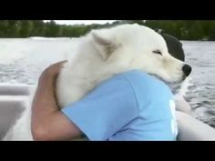 "De la Lume Adunate - Sexy ,Gaguri , Glume ,Farse ,Prank ,Funny !: Faze Super Tari  - ""LOVE"" - De la Lume Adunate - I... Cute Animal Memes, Cute Animal Videos, Cute Funny Animals, Funny Animal Pictures, Cute Baby Animals, Animals And Pets, Cute Dogs, Cute Babies, Cute Pictures"