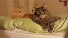 Raku and Maple