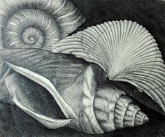 drawings of shells Drawing Projects, Drawing Lessons, Art Projects, Fish Drawings, Art Drawings, Observational Drawing, Texture Drawing, Ap Studio Art, Still Life Drawing