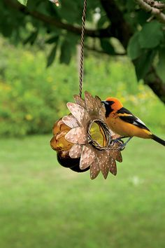Gift idea - Jelly feeder attracts Orioles!