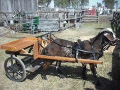 diy goat cart - Google Search
